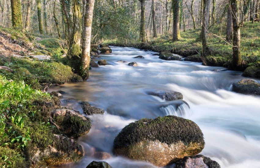 The-River-Dave-Eales